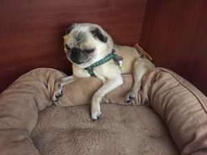 Loki Resting